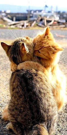 Funny Cute Cats, Cute Baby Cats, Cute Little Animals, Cute Cats And Kittens, Kittens Cutest, Baby Animals Pictures, Cute Animal Pictures, Funny Animals, Pretty Cats