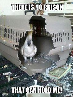 Bird Humor