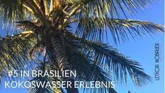 Hast du dich schon mal gefragt, wie man zum Kokosnusswasser kommt? Schau dir das mal an! (Das war bei meinen Eltern in Brasilien!)