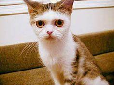 仔猫時代 : まこという名の不思議顔の猫