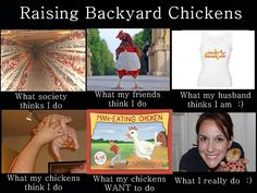 The Truth about Chicken Keeping