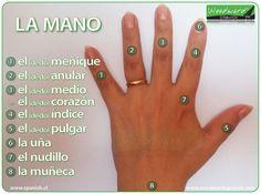 Las partes de la mano y los nombres de los dedos en español - #ELE #Spanish