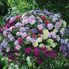 Best Garden Seeds Heirloom 'Mudan' Hanging Mixed Double Petunia Hybrid Seeds, 200 seeds, professional pack, a must for hanging baskets Beautiful Home Gardens, Beautiful Flowers Garden, Rare Flowers, Amazing Gardens, Balcony Plants, Outdoor Plants, House Plants, Petunias, Flower Seeds