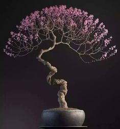 Bonsai fan #bonsai fan!