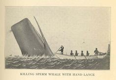 Killing Sperm Whale with Hand Lance