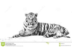 Viewing Gallery For - Tiger Face Clipart Black And White