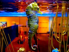 The Seahorse. Birch Aquarium, La Jolla. - Submitted by: icebox360