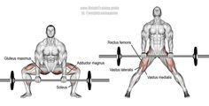 Barbell sumo deadlift. A major compound exercise! Target muscles: Gluteus Maximus and Erector Spinae. Synergistic muscles: Quadriceps (Rectus Femoris, Vastus Lateralis, Vastus Medialis, Vastus Intermedius), Adductor Magnus, Soleus, (and, if lifting heavy) Latissimus Dorsi and Wrist Flexors. Dynamic stabilizers (not highlighted): Hamstrings and Gastrocnemius. Visit site to learn proper form and safety. Note: Position of feet in right image is wrong. Should be same as in left image.