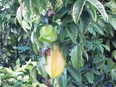 Fruit trees are a great source of health food.