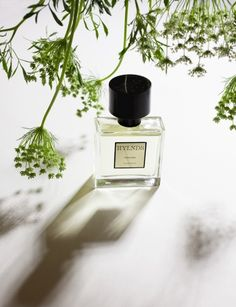 This Summer's New Perfumes - Vogue Daily - Fashion and Beauty News and Features - Vogue