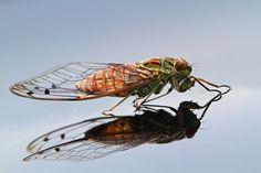 Cicada by shikhei goh on 500px