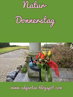 rote und gelbe Frühlings-Tulpen Outdoor Furniture Sets, Outdoor Decor, Daffodils, Natural Garden, Shade Perennials, Tulips, Hobbies