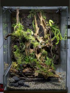 Custom terrarium designed with live plants and wooden decorations. Custom terrarium designed with li Terrariums Gecko, Gecko Terrarium, Terrarium Reptile, Aquarium Terrarium, Gecko Vivarium, Tarantula Enclosure, Reptile Enclosure, Reptile Habitat, Reptile Cage