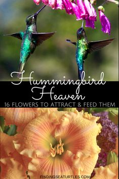 Perennials That Attract Hummingbirds to Your Garden! - Finding Sea Turtles 16 Perennials for Hungry Perennials for Hungry Hummingbirds