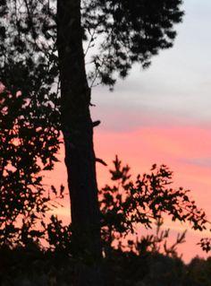 Pink sunset..