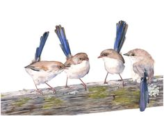 Fairy Wren print of watercolour painting  A4 size by LouiseDeMasi