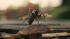 Little Hero, Big Screen: The Entomology Of 'Ant-Man' by Neda Ulaby, npr #Antman #Film #Science #Entomology