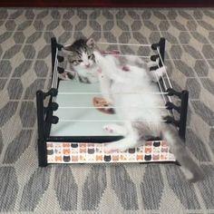 The first rule about Kitty fight club is ... Follow @9gag 🐱 App📲👉@9gagmobile 👈 #9gag #instacat (credit: @veggiedayz) #cute #fluffy