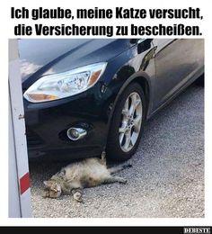 Ich glaube, meine Katze versucht, die Versicherung zu bescheißen.. | Lustige Bilder, Sprüche, Witze, echt lustig