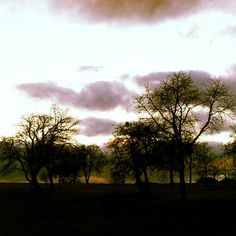 sadness in trees Sadness, Trees, Celestial, Sunset, Outdoor, Outdoors, Tree Structure, Grief, Sunsets