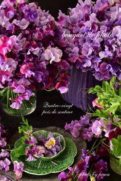 Poitou de Saint Tours ♡ | classe de Azumino Matsumoto fleurs Gurudeko Pois de Senteur Poitou de Saint Tours