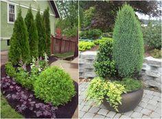 immergrüne Pflanzen sind pflegeleicht und schön