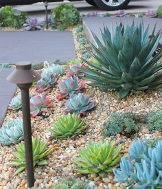 Wild About Succulents - Orange County Landscape Designer - Landscape Architect Fountain Valley Succulent Landscaping, Modern Landscaping, Front Yard Landscaping, Succulents Garden, Backyard Landscaping, Landscaping Ideas, Landscaping Software, Modern Landscape Design, Landscape Plans
