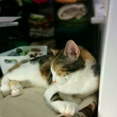 Bobine, notre petit mascotte d'amour, fait sa sieste dans l'Atelier Bloup Coussins cette après-midi.