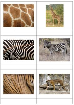 Page 1 of 7 Diy Montessori, Montessori Toddler, Montessori Materials, Montessori Activities, Preschool Activities, Animal Coverings, Le Zoo, Animal Activities, Preschool At Home