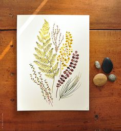 Botanical Watercolor Illustration: Plant mix no.02  8x10 by evajuliet on Etsy #studiopaars