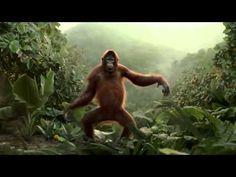 funny monkey- dances on indian song - Go Nawaz Go - Very funny monkey dance funny monkey dance clasic indian song . funny monkey dance in nepali song. Happy Birthday Dancing, Funny Happy Birthday Song, Happy Birthday Video, Happy Birthday Brother, Birthday Songs, Monkey Dance, Cv Curriculum Vitae, Steve Miller Band, Jungle Love