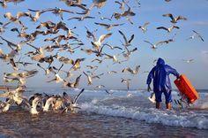 Alexandre Porto da Rocha Coutinho Feeding the Nature