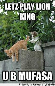 Let's play Lion King. . . lol
