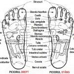 Acupressure Benefits Benefits of Acupressure Points - Most Important Spots in Human Body - Generally a lot of people have doubts on the benefits of Acupressure points. There are a lot of Acupressure points in both hand and feet of our human body. Acupressure Points In Hand, Acupuncture Points Chart, What Are Essential Oils, Young Living Essential Oils, Acupuncture Benefits, Acupressure Treatment, Acupressure Therapy, Mudras, Foot Reflexology