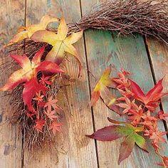 autium leaves for home decorating