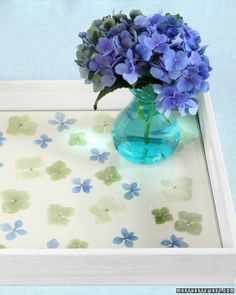 Make a breakfast tray (or something else like a table) with pressed hydrangeas.