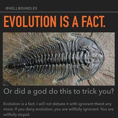It is a credit to the teachers of our land that people can think this - that evolution is a fact. Slow change and mutations ARE a fact, but speciation is not only unproven, all the evidence goes against it.