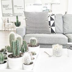 Plantinhas e cinza
