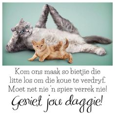 Goeie More, Good Morning Wishes, Afrikaans, Cats, Weather, Animals, Gatos, Animales, Animaux