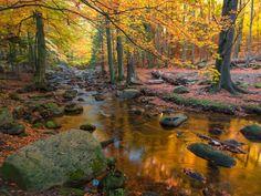 Harz National Park in Autumn, Saxony-Anhalt, Germany