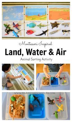 Land, water and air animal sorting