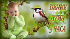 Звуки Природы для Детей   Пение Птиц, Шум Воды для Ребёнка и Родителей