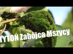 Herbs, Youtube, Lawn And Garden, Herb, Youtubers, Youtube Movies, Medicinal Plants