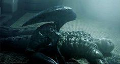 O diretor Ridley Scott comenta sobre seu arrependimento de não ter dirigido as sequências de Alien, e sobre os próximos filmes da franquia.