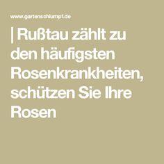| Rußtau zählt zu den häufigsten Rosenkrankheiten, schützen Sie Ihre Rosen