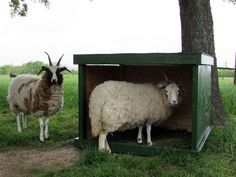 """This mobile sheep shelter is a good option for those who are raising sheep on a small scale and are focused on pasture grazing. It can also be used as a goat shelter or for other small farm animals. Sheep Shelter, Goat Shelter, Sheep House, Goat Care, Barns Sheds, Sheep Farm, Shed Design, Small Farm, Raising Chickens"