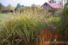 Wizytówka- Ogród Anety - Forum ogrodnicze - Ogrodowisko