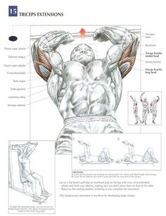 Tricep Extensions - AKA Skull Crushers ~ Re-Pinned by Crossed Irons Fitness #inclineworkout
