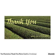 Tea Plantation Thank You Photo Card