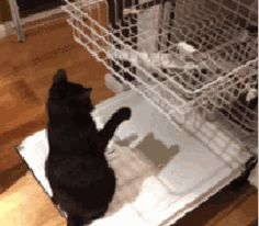 kitten and dish washer    Found on Le Petit Poulailler